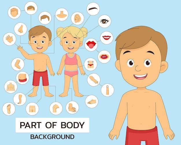 Ilustracja części ciała