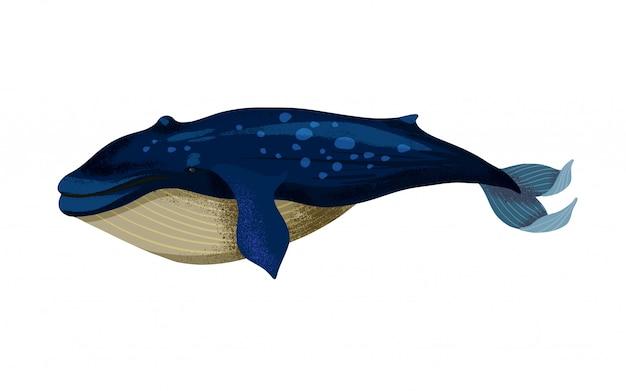 Ilustracja dużego płetwal błękitny na białym tle.