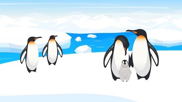 Ilustracja dzikiej przyrody biegun południowy. pingwiny cesarskie rozmnażają się na śnieżnym wzgórzu. kolonia gatunków ptaków polarnych w naturalnym środowisku. śnieżna dzicz. środowisko islandii. postaci z kreskówek zwierząt