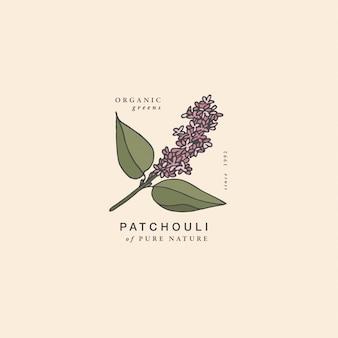 Ilustracja gałąź paczuli - styl vintage grawerowane. skład logo w retro stylu botanicznym.