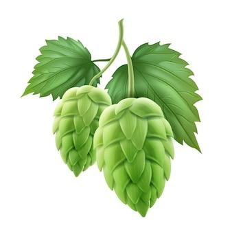Ilustracja gałęzi świeżego zielonego chmielu