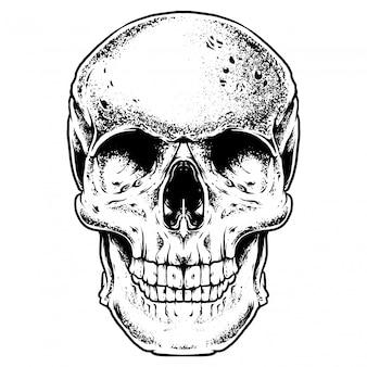 Ilustracja grawerowanie czaszki