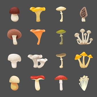 Ilustracja grzybów do menu i receptur. jadalne i trujące jedzenie
