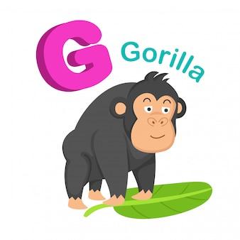 Ilustracja izolowane alfabet litera g goryl