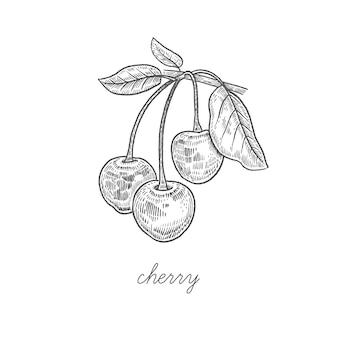 Ilustracja jagody wiśniowe.