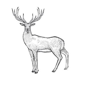 Ilustracja jelenia zwierząt leśnych.