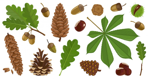 Ilustracja jesień liść i orzechy