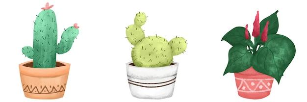 Ilustracja kaktusów i roślin ozdobnych w pastelowych kolorach