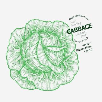 Ilustracja kapusty. ręcznie rysowane ilustracja warzyw.