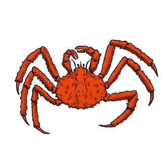 Ilustracja king crab na białym tle