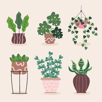 Ilustracja Kolekcji Roślin Doniczkowych Darmowych Wektorów