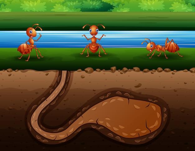 Ilustracja kolonii czerwonych mrówek przy brzeg rzeki