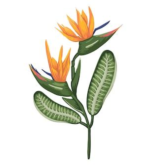 Ilustracja kolorowy tropikalny kwiat na białym tle. strelizia w stylu przypominającym akwarele. egzotyczny kwiatowy szczegółowy rysunek. element projektu zwrotnika
