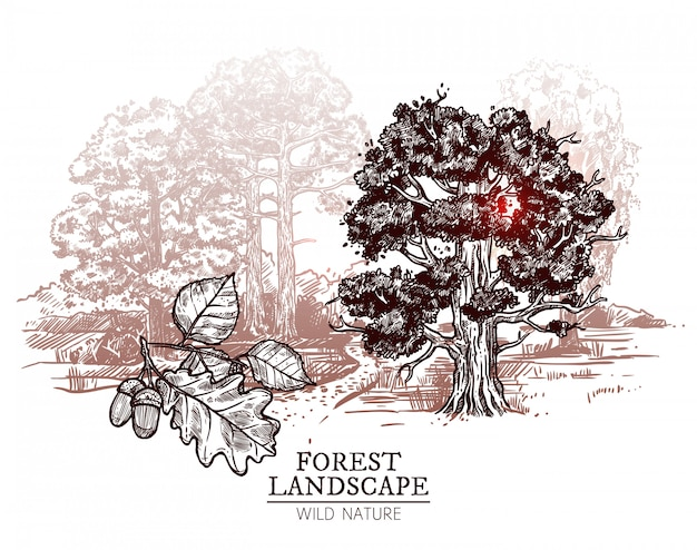 Ilustracja krajobraz drzewo szkic