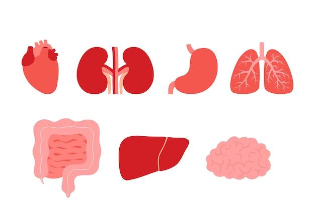 Ilustracja kreskówka narządów wewnętrznych człowieka