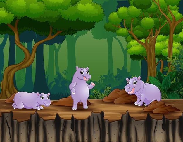Ilustracja kreskówka trzech hipopotamów w tle lasu