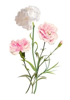 Ilustracja kwiat goździka