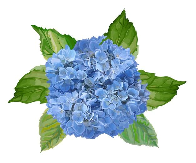Ilustracja kwiat hygrangea