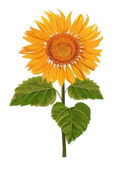 Ilustracja kwiat na białym tle słońce