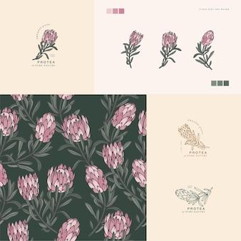 Ilustracja kwiat protea vintage grawerowane styl