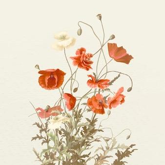Ilustracja kwiatu maku w stylu vintage, zremiksowana z dzieł należących do domeny publicznej
