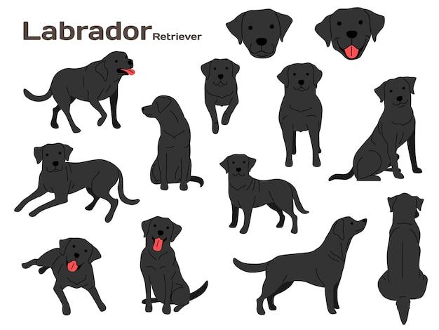 Ilustracja labrador