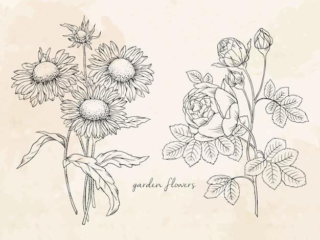 Ilustracja liniowa kwiatów ogrodowych róży i słonecznika