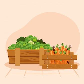 Ilustracja marchew i brokuły, warzyw żywności ekologicznej zdrowe świeże naturalne i rynku