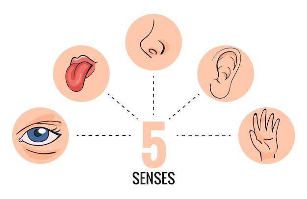 Ilustracja narządów zmysłów