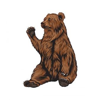 Ilustracja niedźwiedź grizzly