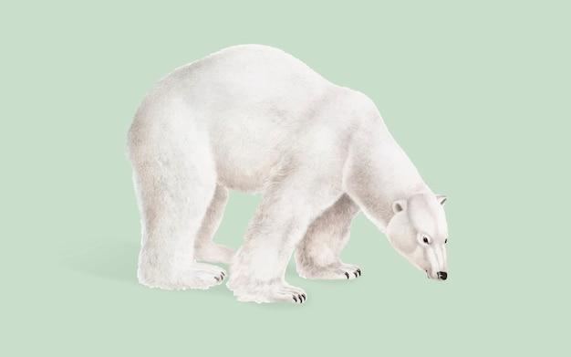 Ilustracja niedźwiedź polarny