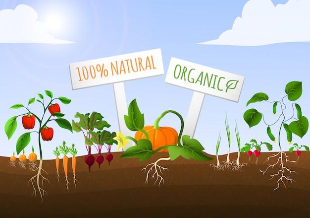 Ilustracja ogród warzywny