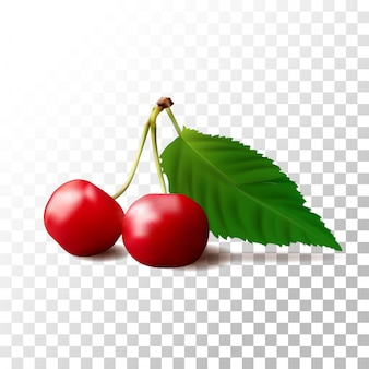 Ilustracja owoce wiśni na przezroczyste