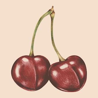 Ilustracja owoców w stylu przypominającym akwarele