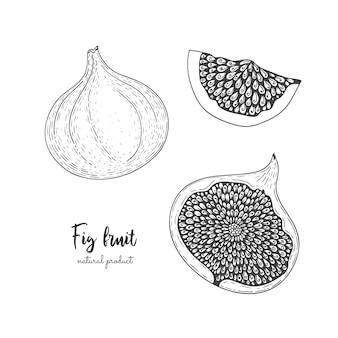 Ilustracja owoców z figami w stylu grawerowania. szczegółowe wegetariańskie jedzenie.