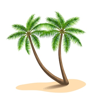 Ilustracja palmy