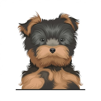 Ilustracja pies yorkshire terrier