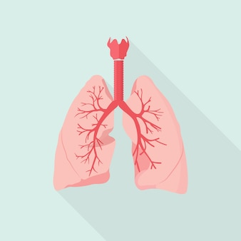 Ilustracja płuc człowieka