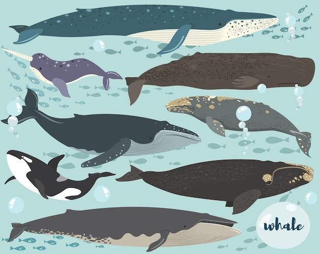 Ilustracja podwodnej kolekcji gatunków wielorybów
