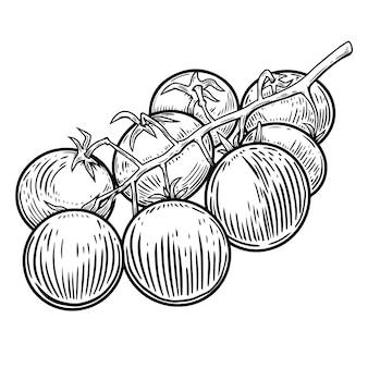 Ilustracja pomidorków koktajlowych na białym tle. element projektu plakatu, karty, banera, ulotki, menu. ilustracja wektorowa