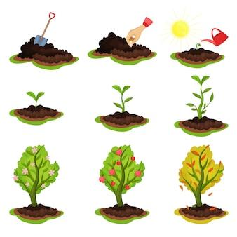 Ilustracja przedstawiająca etapy uprawy roślin. proces od sadzenia nasion do drzewa z dojrzałymi jabłkami. motyw ogrodniczy i uprawowy