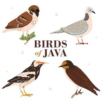 Ilustracja przedstawiająca różne rodzaje ikon ptaków na wyspie jawa