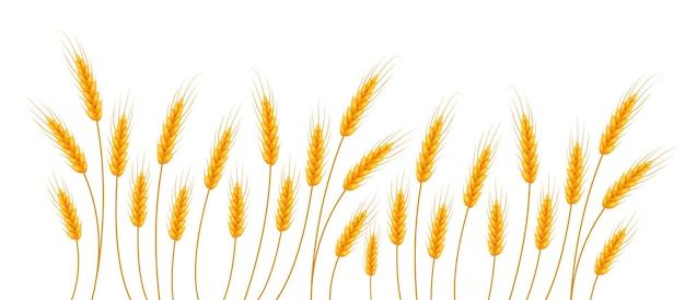 Ilustracja pszenicy.