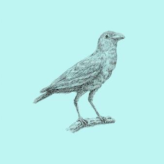 Ilustracja ptak grafika