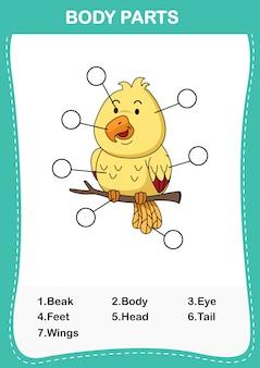 Ilustracja ptasiej części ciała, zapisz poprawną liczbę części ciała