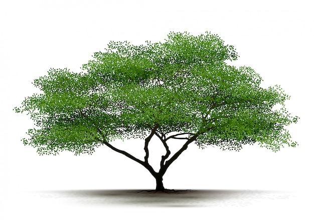 Ilustracja realistyczne drzewo na białym tle