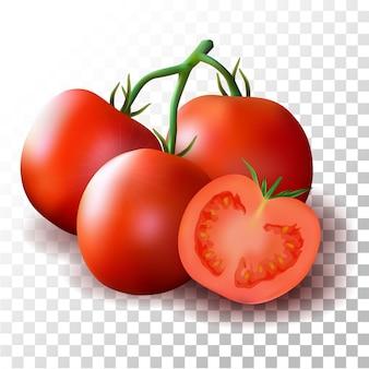 Ilustracja realistyczny pomidor