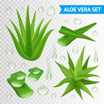 Ilustracja roślin aloe vera