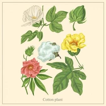 Ilustracja roślin bawełny