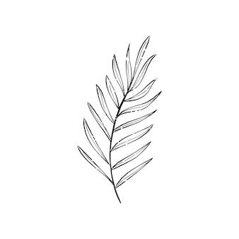 Ilustracja roślin